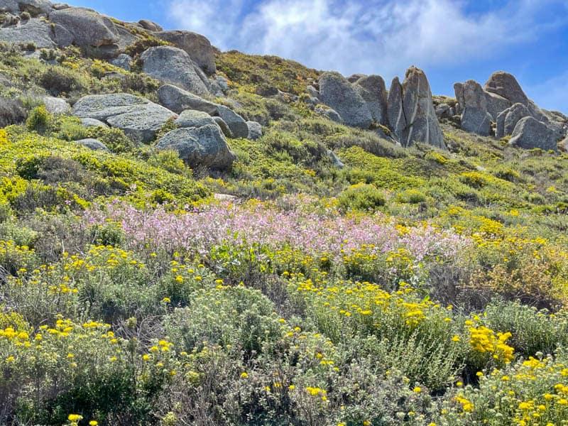 A view from the Carmel Meadows Trail near Carmel Highlands, California