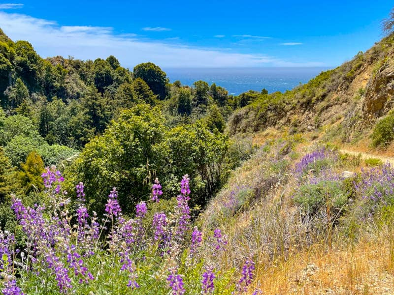 A view of Partington Canyon and the Pacific Ocean from the Partington Cove Trail in Julia Pfeiffer Burns State Park in Big Sur, California
