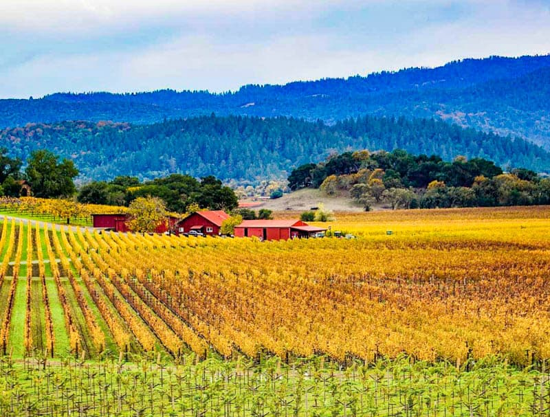 A view from Silverado Trail in Napa Valley, California, in the fall