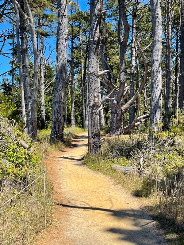 Granite Trail in Point Lobos State Reserve in California