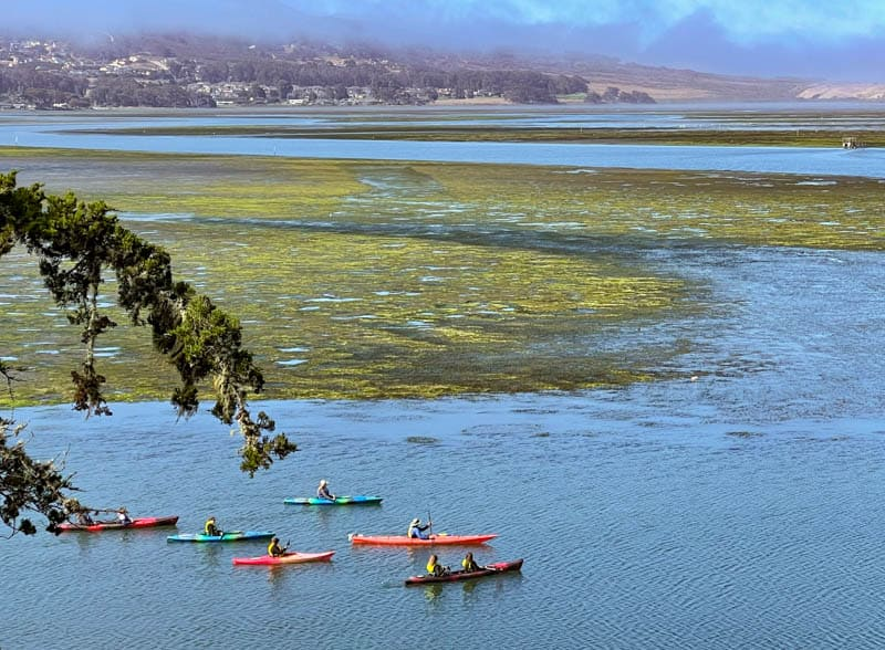 Kayaking is a great way to get up close to the wildlife and marine life in Morro Bay, California