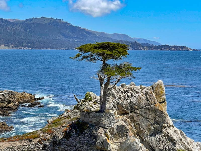 The Lone Cypress along the 17-Mile Drive in Pebble Beach, CA