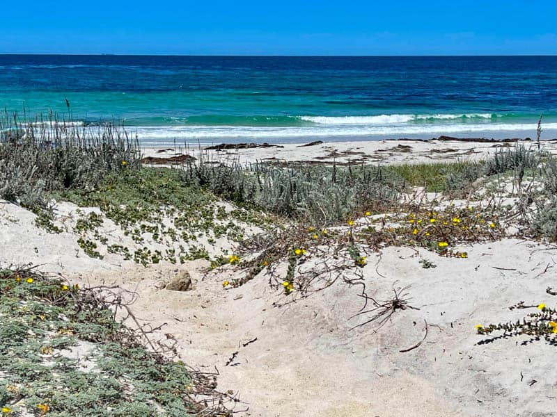 Spanish Bay Beach in Pebble Beach California is a famous stop on the 17-Mile Drive