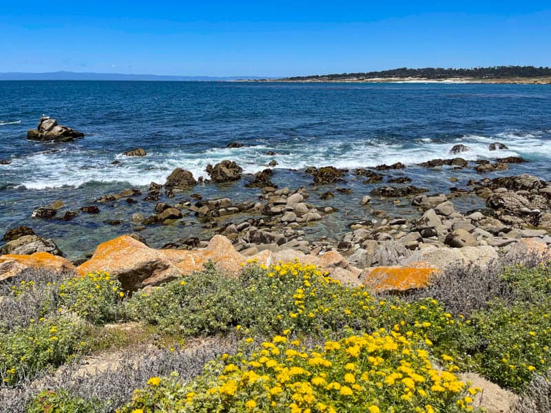A bright spring day along the 17-Mile Drive in California