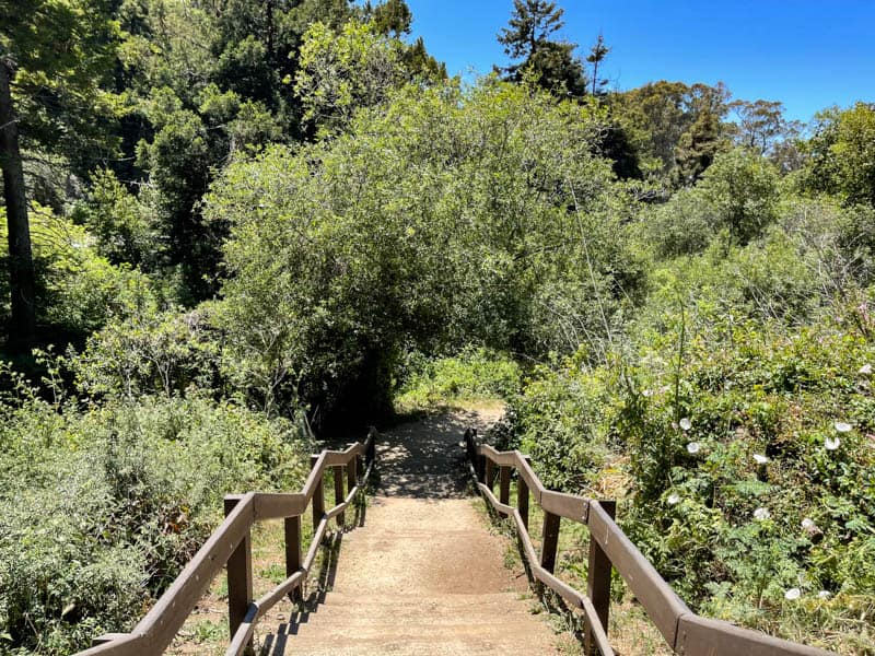 There are some steps at the start of the McWay Falls Overlook Trail in Big Sur