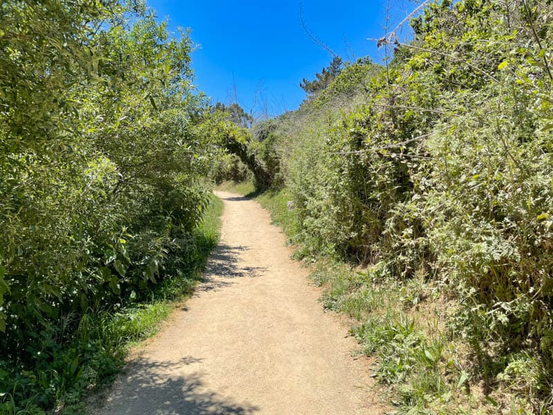 Overlook Trail to McWay Falls in Big Sur