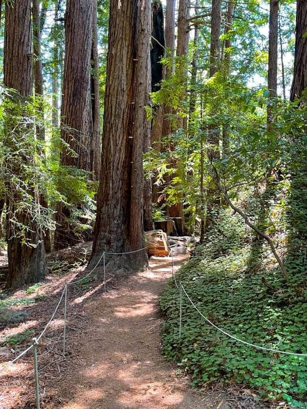 Valley View Trail in Pfeiffer Big Sur State Park, California