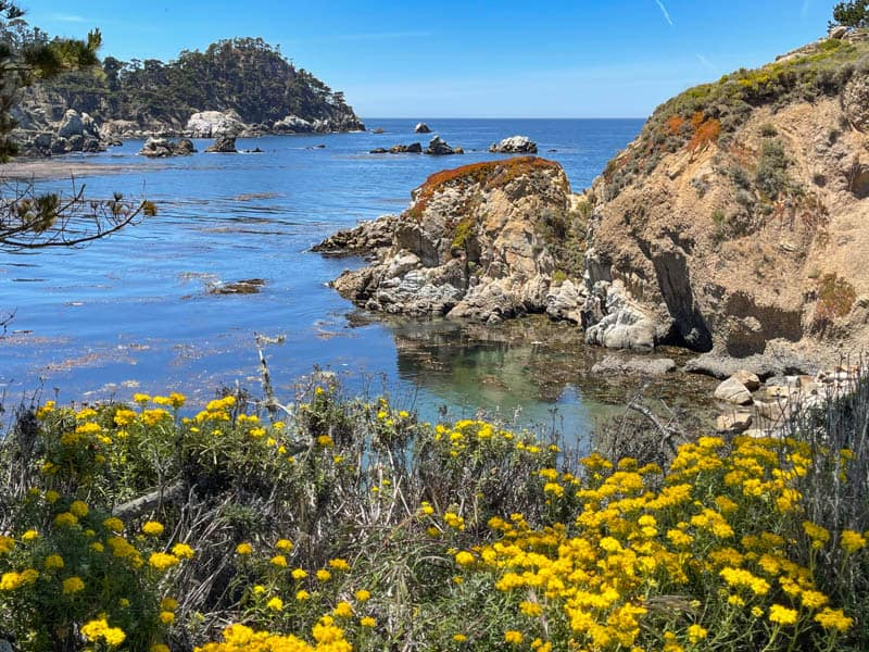 View from Granite Trail in Point Lobos State Park in Carmel, California