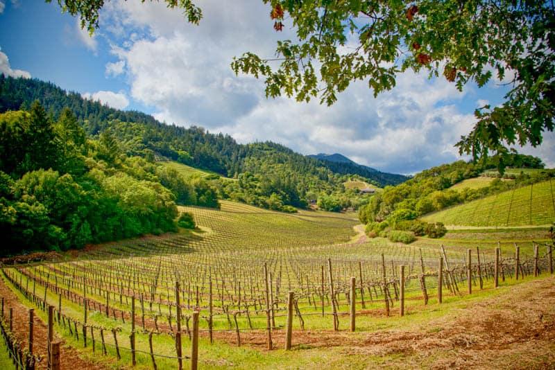 A vineyard in Napa Valley, California