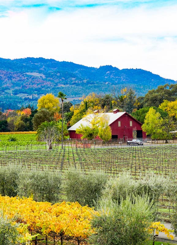 View from Winery Napa Valley California