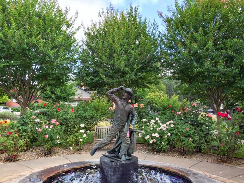 Pretty rose garden in Yountville in Napa Valley California