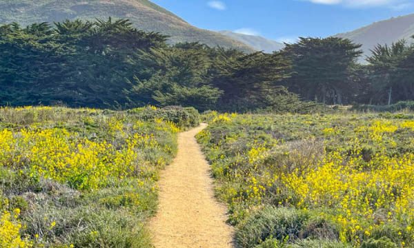 Hiking Trail in Big Sur, CA
