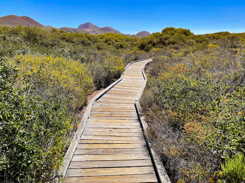 The boardwalk trail at the Elfin Forest in Los Osos California