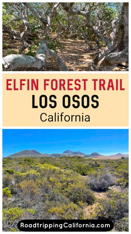 Discover what to expect on ther beautiful boardwalk trail at the Elfin Forest in Los Osos, California, just south of Morro Bay. Plus our tips for hiking the trail!