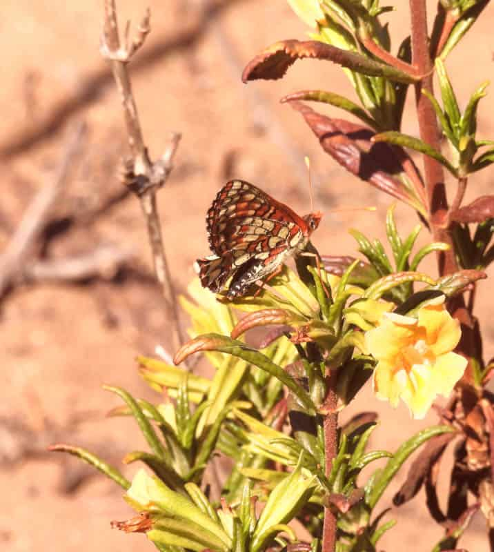 A butterfly at the Elfin Forest in Los Osos CA