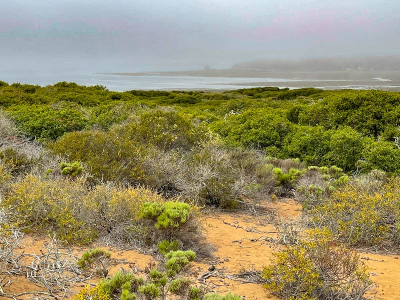 View from the Elfin Forest hike in Los Osos CA