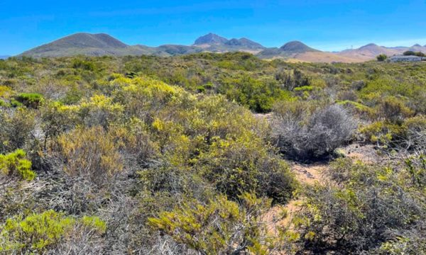 Elfin Forest, Los Osos: Walk the Beautiful Boardwalk Trail!