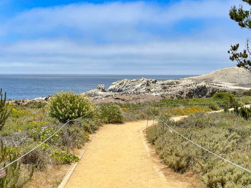 A hiking trail in Point Lobos SNR, California