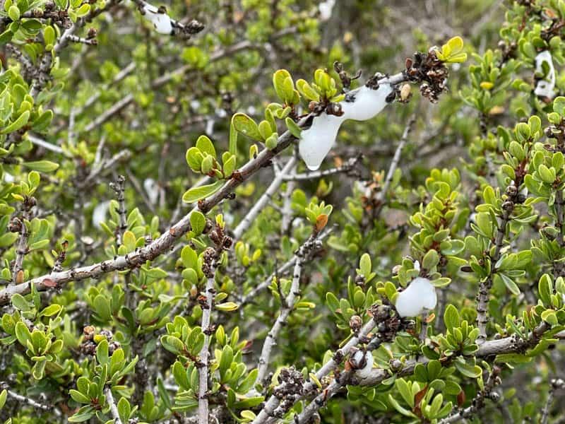 Elfin Forest Flora in Los Osos, California