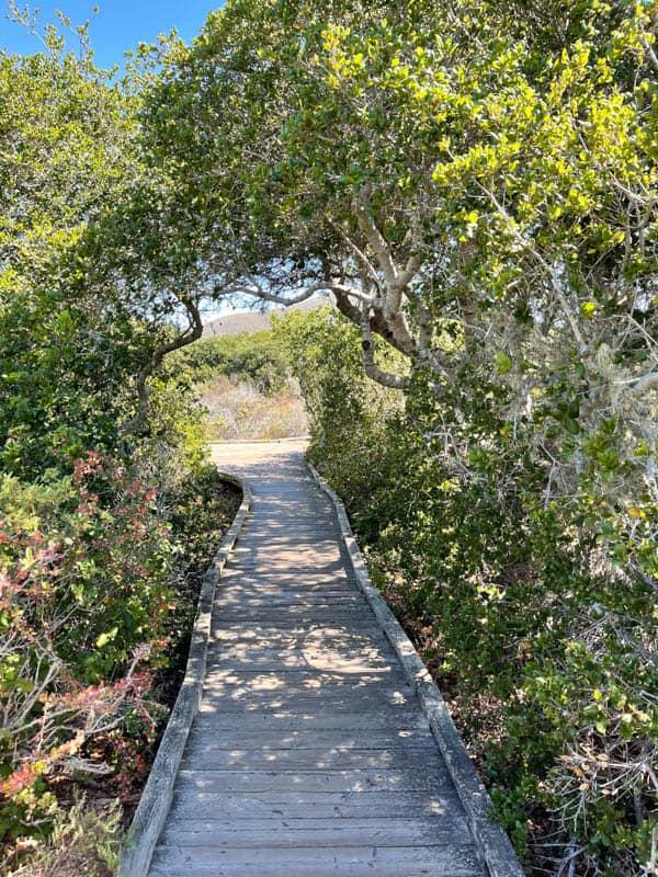 Walking the boardwalk trail through the Elfin Forest in Los Osos, CA