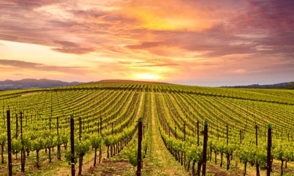 Napa Valley is one of California's premier wine regions