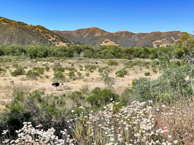 The picturesque setting of Ostrichland USA near Solvang, California