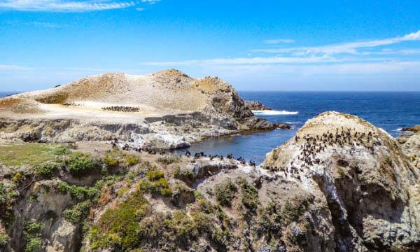 Bird Island Trail in Point Lobos