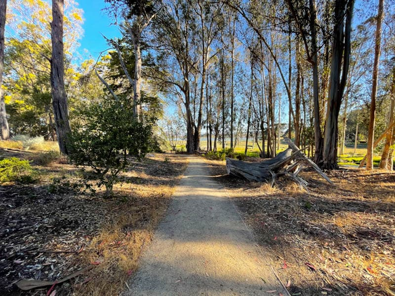 The trails at Sweet Springs Nature preserve in Los Osos make for pleasant walking.