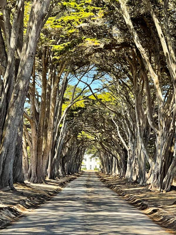 The Cypress Tree Tunnel at Point Reyes in California