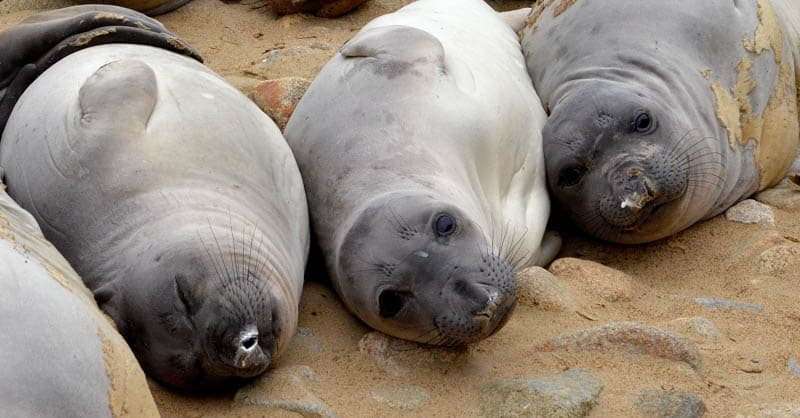 Seals on the beach at Point Reyes, California
