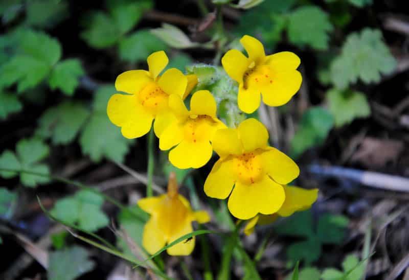Wildflowers in Point Reyes, California
