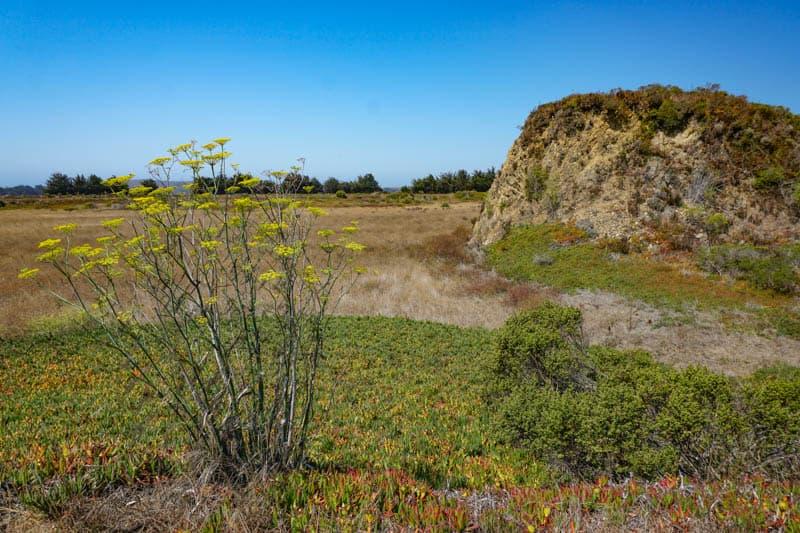 Walking the C oastal Bird Walk Access trail in Bodega Bay, CA