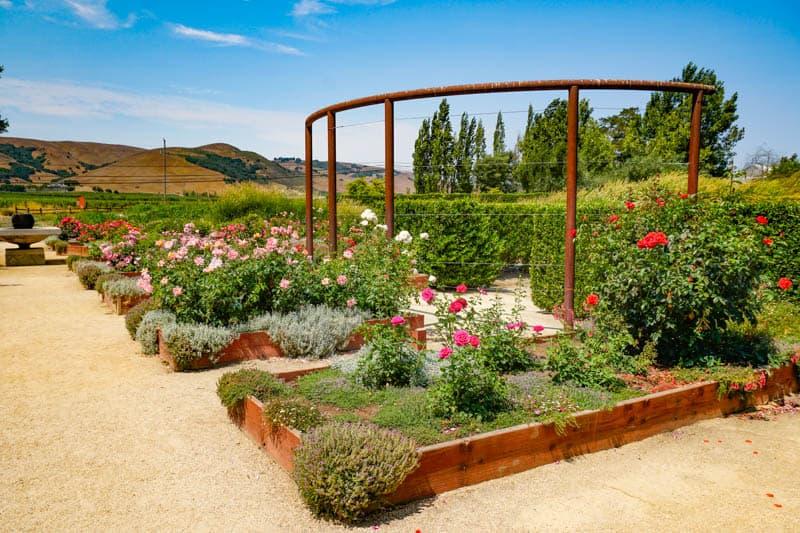 Rose garden at Cornerstone in Sonoma CA