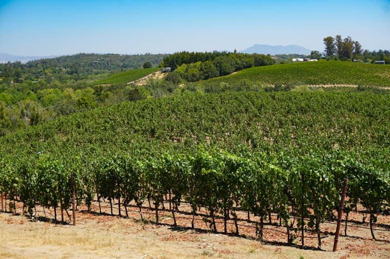 View from Iron Horse Vineyards near Sebastopol