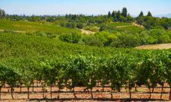 11 Enjoyable Things to Do in Sebastopol, California