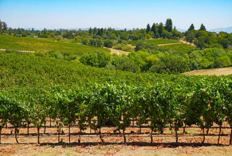 Sebastopol is a must-visit in Sonoma County, CA