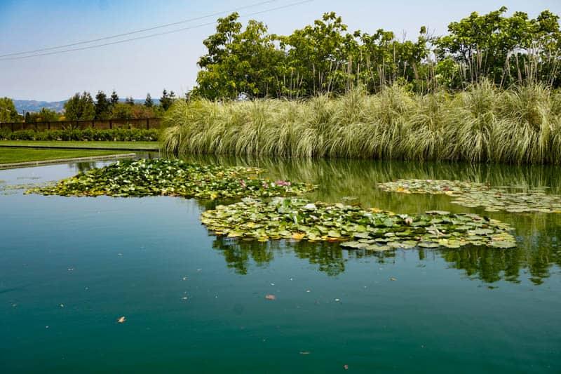 Water garden at Cornerstone in Sonoma, California