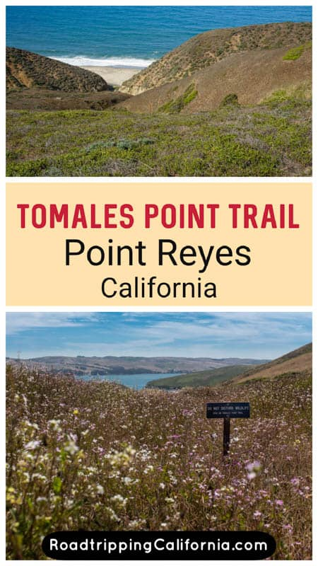 Discover what to expect on the stunning Tomales Point Trail in Point Reyes National Seashore, California. Plus tips for hiking this epic trail!