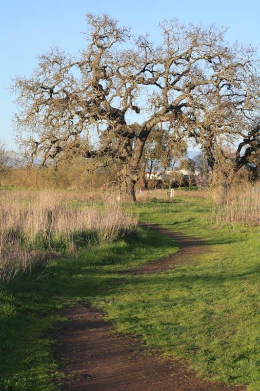 The Meadowlark Loop at the Laguna de Santa Rosa in Sebastopol, CA