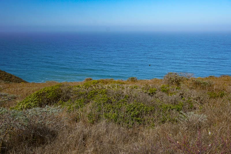 Views of the Pacific at Tomales Point in Point Reyes, CA