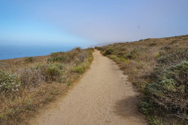 Tomales Point Trail in the morning