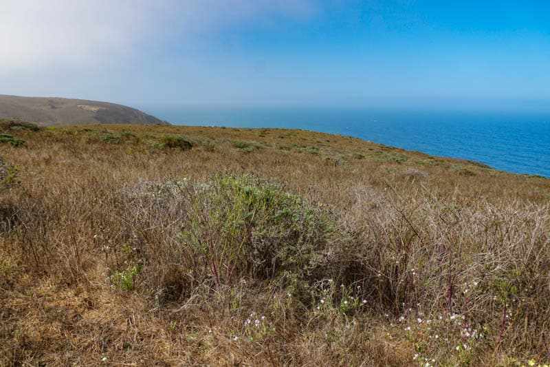 Tomales Point Trail cin Point Reyes Peninsula