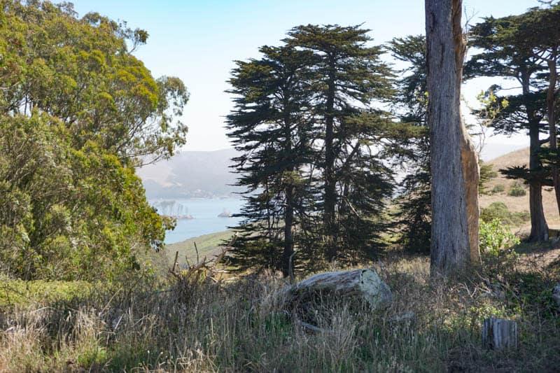 Trees around Pierce Point Ranch in Point Reyes CA
